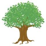 Großer Baum mit Blatt Lizenzfreie Stockfotos