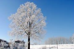 Großer Baum mit gefrorenen Niederlassungen Stockbilder