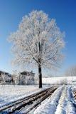 Großer Baum mit gefrorenen Niederlassungen Stockfoto