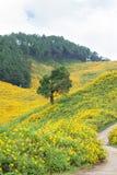 Großer Baum mitten in einem Feld von Blumen. Stockfotos