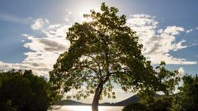 Großer Baum nahe Fluss mit Aurasonnenlichtstrahl und weiße Wolke bei Sonnenuntergang im Sommer Stockfoto
