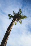 Großer Baum in Ost-Borneo-Regenwald, Kalimantan Indonesien Stockbilder