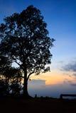 Großer Baum silhouettiert lizenzfreie stockfotografie