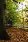 Großer Baum steht in den schönen Farben Stockbilder