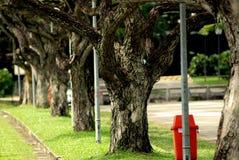 Großer Baum und Anlagen lizenzfreie stockfotos