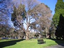 Großer Baum und Bank darunterliegend im Park, Melbourne Stockbilder