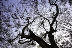 Großer Baum und Niederlassungen des Baums obenliegend Lizenzfreie Stockbilder