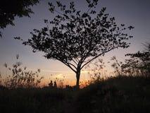 Großer Baum und Paare Stockbild