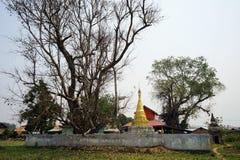 Großer Baum und stupa Lizenzfreies Stockfoto