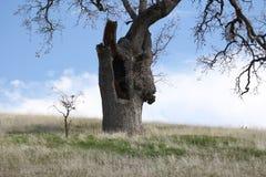 Großer Baum wenig Baum Lizenzfreie Stockbilder