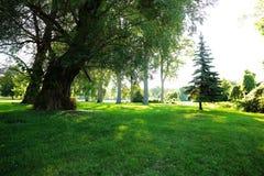Großer Baum wenig Baum Lizenzfreies Stockbild
