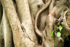 Großer Baumschößling Lizenzfreie Stockfotografie