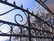 Großer Blütenbaum hinter schwarzen Weinlesezäunen Stockfotos
