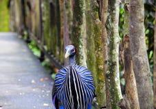 Großer blauer Vogel stockfotos