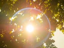 großer Blendenfleck, Sonne glänzt durch die Niederlassungen Stockfotografie