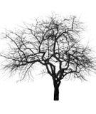 Großer bloßer Baum Stockfotografie