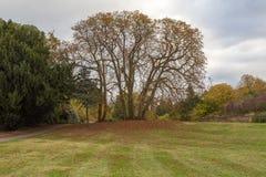Großer bloßer Herbstbaum mit Gras im Vordergrund Lizenzfreies Stockbild