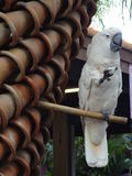 Großer blockly Kakadu Stockfoto