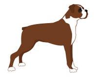 Großer brauner Hund auf einem weißen Hintergrund Stockbild