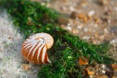 Großer britischer Sommer Pebble Beach mit Seeoberteil Stockbilder