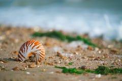 Großer britischer Sommer Pebble Beach mit Seeoberteil Stockfotografie