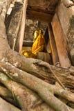 Großer Buddha in der Kircheabdeckung durch alte große Baumwurzel Stockfotos