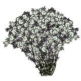 Großer Busch eines dogrose mit Blumen der hellgrünen Farbe Lizenzfreie Stockbilder