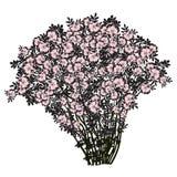 Großer Busch eines dogrose mit Blumen der kalt-rosa Farbe Stockfoto