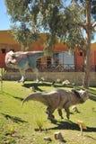Großer Dinosaurier Park, wo Spuren dieser alten Reptilien stockbilder