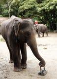 Großer Elefant Stockbild