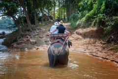 Großer Elefant, der den Fluss im Dschungel kreuzt lizenzfreie stockfotos