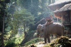 Großer Elefant, der Gras nahe dem Häuschen isst Stockfotografie