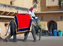 Großer Elefant für Reise in Amber Fort Stockbilder