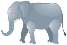 Großer Elefant mit grauer Haut Stockfoto