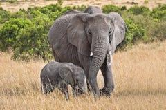 Großer Elefant mit Schätzchen Lizenzfreies Stockfoto
