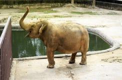 Großer Elefant am Zoo durch die Poolnahaufnahme lizenzfreie stockbilder