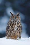 Großer Eurasier Eagle Owl mit schneebedecktem Stumpf mit Schneeflocke während des Winters Lizenzfreies Stockfoto