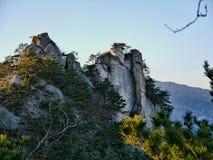 Großer Felsen und ein Wald mit Koniferenbäumen Stockbilder