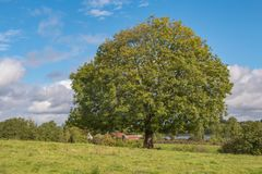 großer grüner Baum und blauer Himmel lizenzfreie stockbilder
