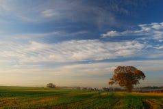 Großer Himmel des Herbstbaums Stockfotos