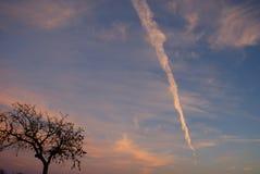 Großer Himmel und Baum bei Sonnenuntergang Stockbilder