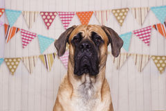 Großer Hund stockfoto
