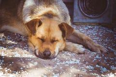 Großer Hund Stockfotos