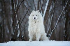 Großer Hund, der auf dem Schnee sitzt Lizenzfreie Stockbilder