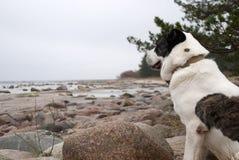 Großer Hund, der auf dem Ufer der Ostsee sitzt stockbild