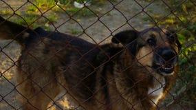 Großer Hund in der Gefangenschaft hinter dem Netz Stockbilder