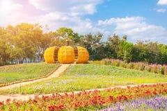 Großer Kürbis wird vom Mais am großen Bauernhof an Jim Thompson-Bauernhof gemacht Stockfotos