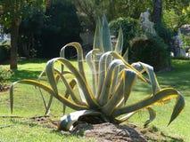 Großer Kaktus mit Spinnennetzen in den botanischen Gärten in Athen, Griechenland stockfotos