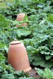 Großer keramischer Töpferwarentopf in einem Gemüsegarten Lizenzfreies Stockfoto