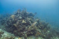 Großer korallenroter Berg Lizenzfreie Stockbilder